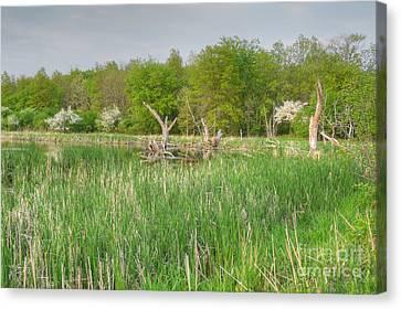 Swamp Corner Canvas Print