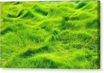 Canvas Print featuring the photograph Swamp Grass Abstract by Gary Slawsky