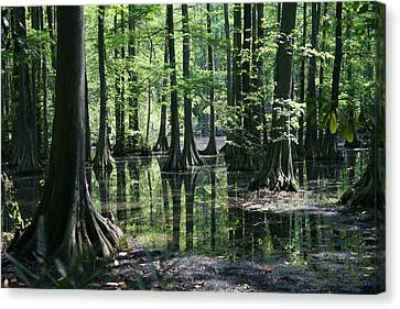 Swamp Land Canvas Print by Cathy Harper