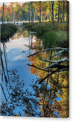 Swamp Reflections Canvas Print by Bill Wakeley