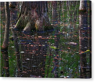 Swamp Canvas Print