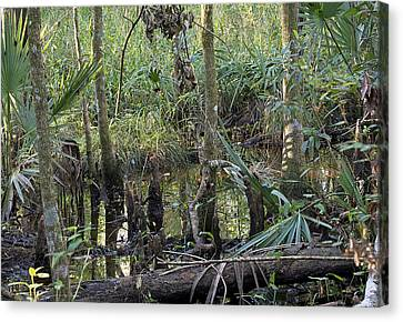 Bromeliad Canvas Print - Swamp Scenery by Kenneth Albin