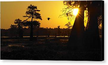 Canvas Print featuring the photograph Swamp Sunrise by Silke Brubaker
