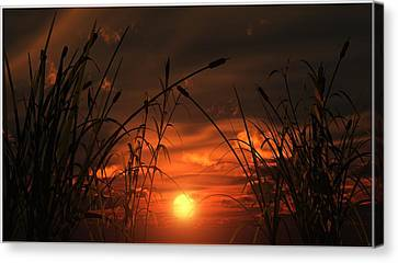 Swamp Sunset  Canvas Print by Tim Fillingim