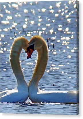 Swan 001 Canvas Print by Jeff Stallard