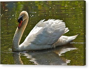 Swan 1 Canvas Print by Greg Vizzi