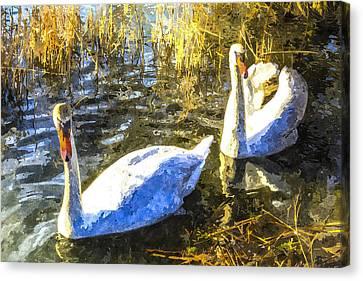 Swan Art Canvas Print by David Pyatt