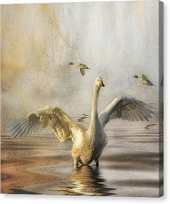 Canvas Print featuring the photograph Swan At Sundown by Brian Tarr