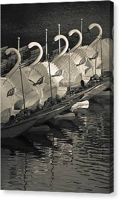 Swan Boats In A River, Boston Public Canvas Print