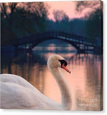 Swan Bridge Canvas Print