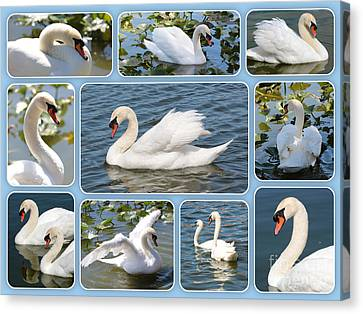 Swan Collage In Blue Canvas Print by Carol Groenen