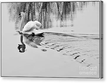 Canvas Print featuring the photograph Swan Elegance by Simona Ghidini