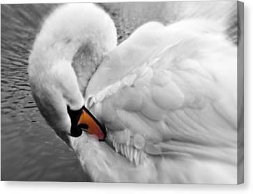 Swan Elegant Canvas Print by Cheryl Cencich