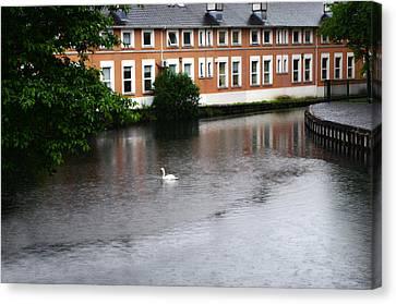 Swan In Dublin Canvas Print