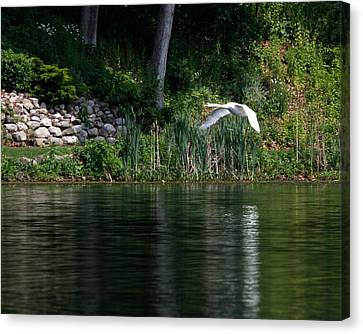 Canvas Print featuring the photograph Swan In Flight by Eleanor Abramson