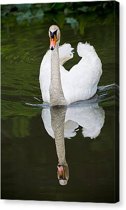Canvas Print featuring the photograph Swan In Motion by Gary Slawsky