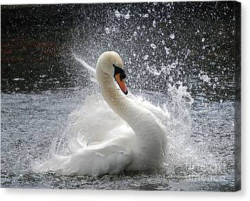 Swan Canvas Print by Kathy Gibbons