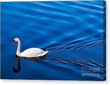 Swan Lake Canvas Print by Adrian Evans