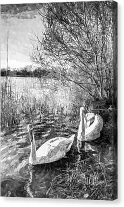 Swan Lake Art Canvas Print by David Pyatt