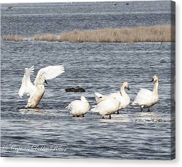 Swan Lake Canvas Print by Captain Debbie Ritter