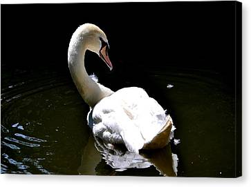 Canvas Print featuring the photograph Swan Lake by Deena Stoddard