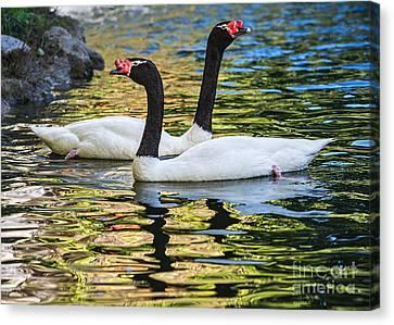 Swan Lake Canvas Print by Jamie Pham