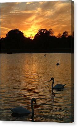 Swan Lake Canvas Print by John Topman