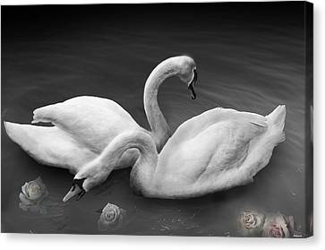 Swan Lake Canvas Print by Larry Butterworth
