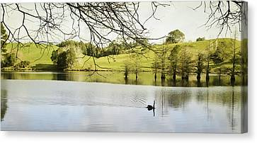 Swan Canvas Print by Les Cunliffe