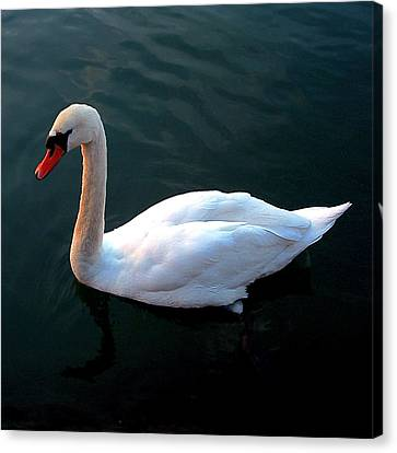 Swan Canvas Print by Marc Philippe Joly