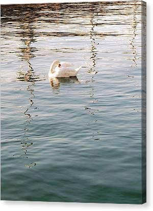 Swan Canvas Print by Nian Chen