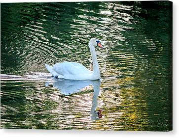 Canvas Print featuring the photograph Swan On Water  by Trace Kittrell