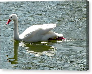Swan Reflection Canvas Print by Terry Weaver