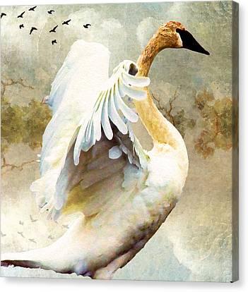 Swan Sense Canvas Print