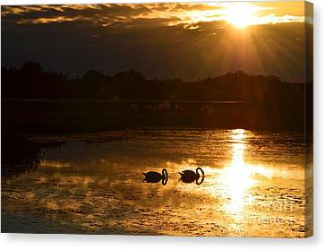 Swan Song Canvas Print by AnnaJo Vahle