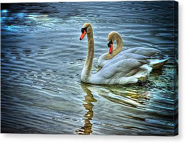 Swan Song Canvas Print by Dennis Baswell