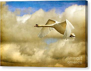 Swan Song Canvas Print by Lois Bryan