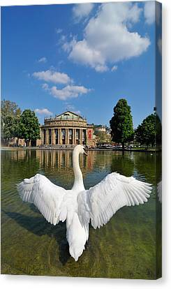 Swan Spreads Wings In Front Of State Theatre Stuttgart Germany Canvas Print by Matthias Hauser