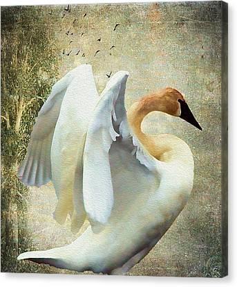 Swan - Summer Home Canvas Print
