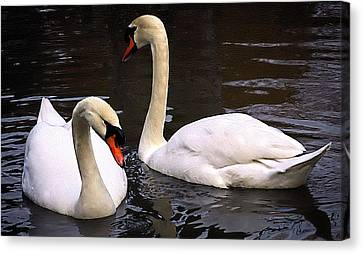 Canvas Print featuring the photograph Swan Two by Elf Evans