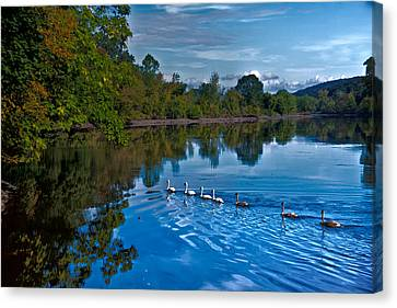 Swanny River Canvas Print by Karol Livote
