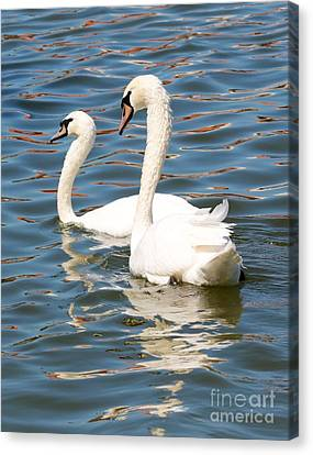 Swans And Swirls Canvas Print by Carol Groenen