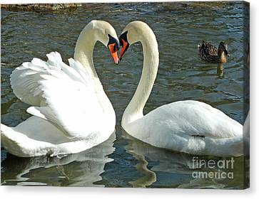 Canvas Print featuring the photograph Swans At City Park by Olivia Hardwicke