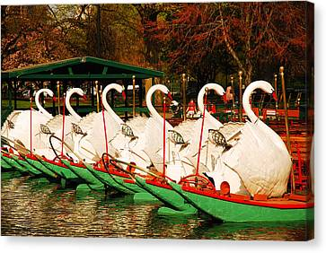 Swans In Boston Common Canvas Print by James Kirkikis