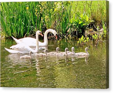 Canvas Print featuring the photograph Swans by Janice Drew