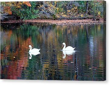 Canvas Print featuring the photograph Swans by Karen Silvestri