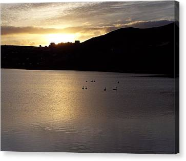 Swans On Loch Canvas Print by George Leask