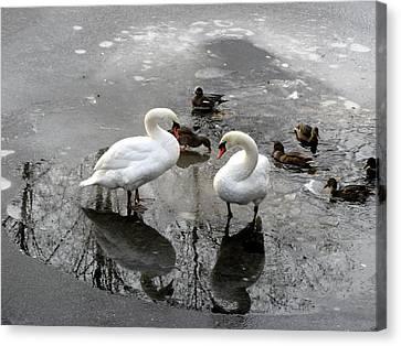 Swans On Thin Ice Canvas Print