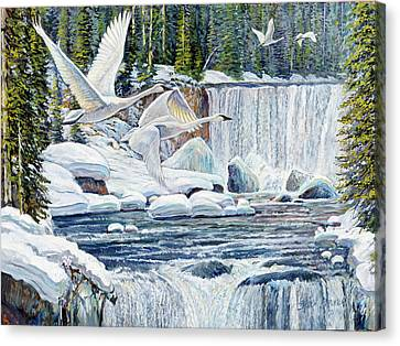 Swans Over Collonade Falls Canvas Print by Steve Spencer