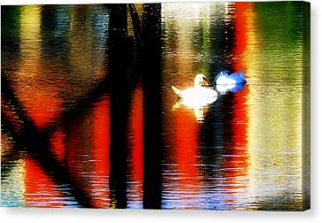 Canvas Print featuring the photograph Swans Sojourn by Aurelio Zucco